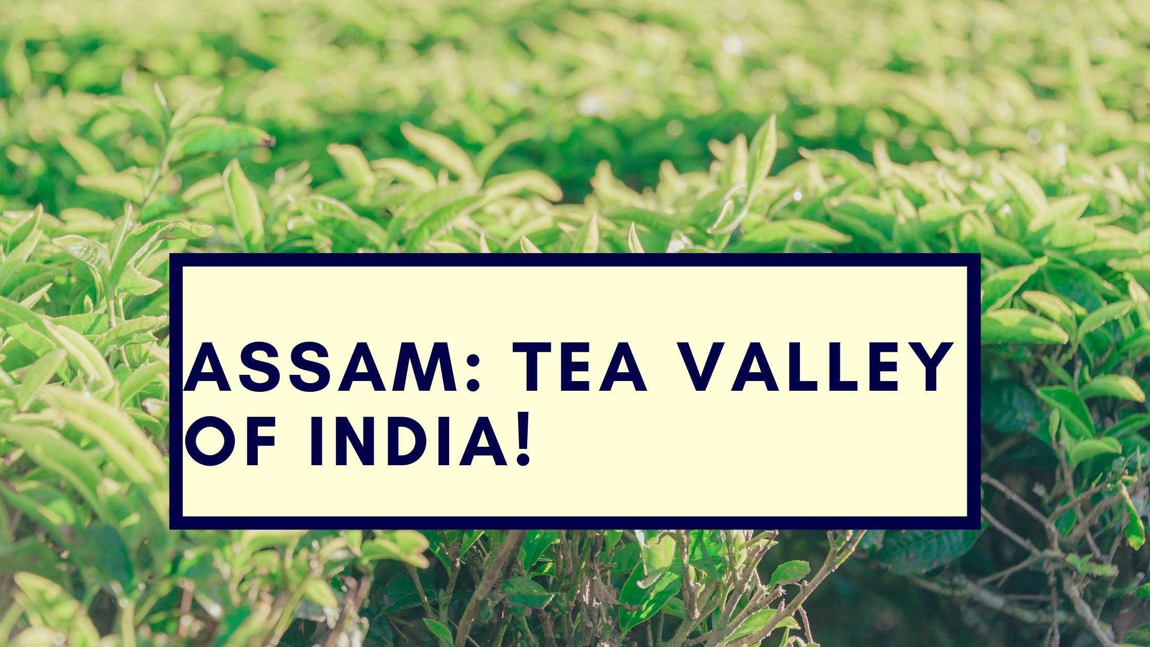 Assam: The Tea Valley
