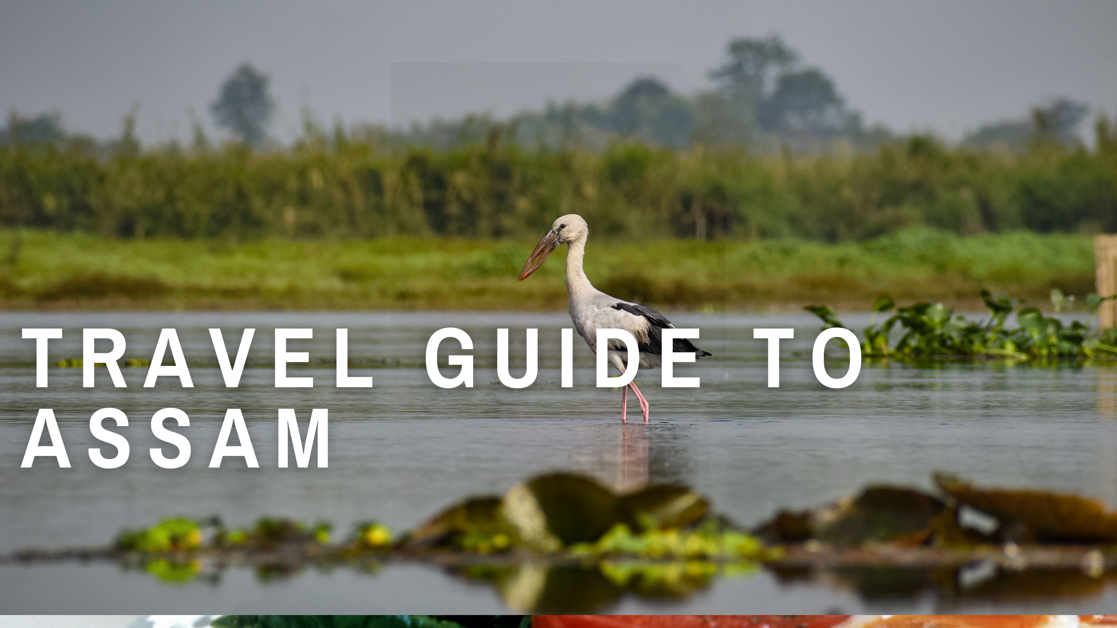 A Travel guide to Assam